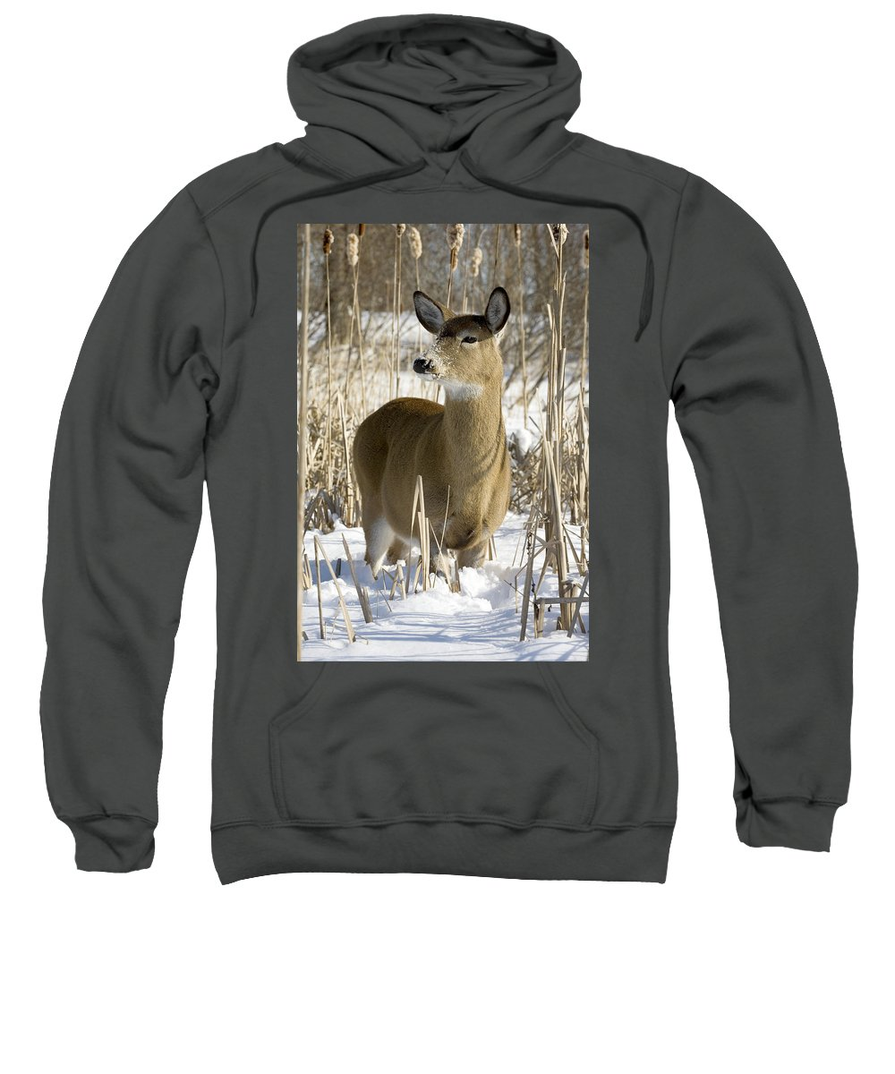 Chilly Sweatshirt featuring the photograph White-tailed Deer In A Snow-covered by Philippe Henry