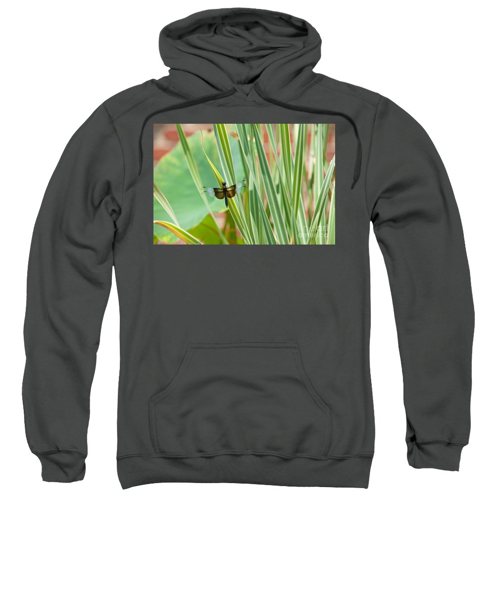Window Skimmer Sweatshirt featuring the photograph Widow Skimmer by Anne Kitzman