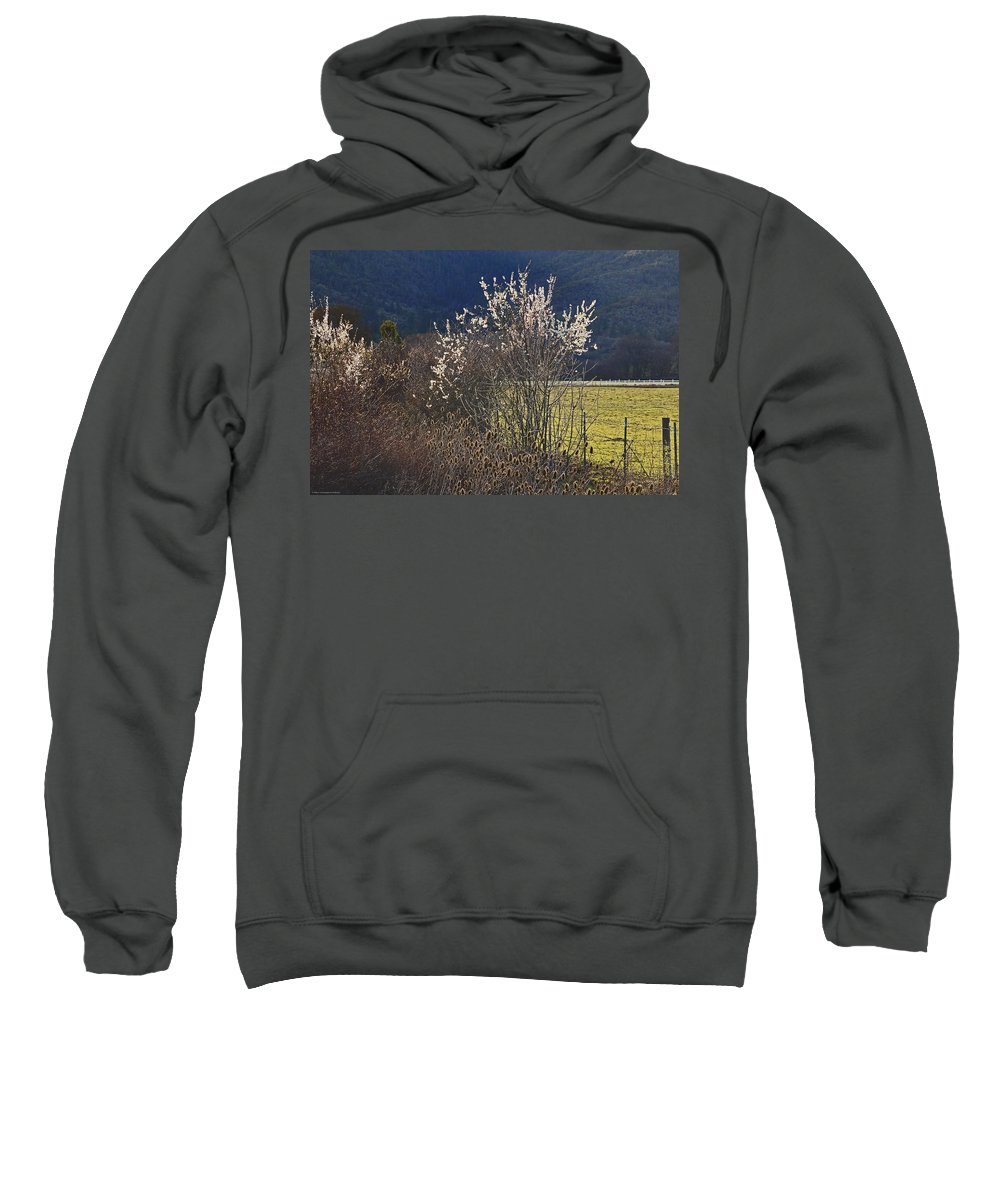 Wild Sweatshirt featuring the photograph Wild Fruit Tree In The Country by Mick Anderson