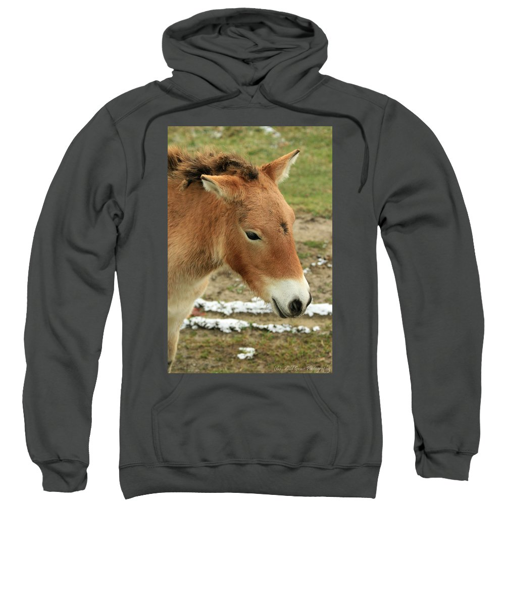 Horse Sweatshirt featuring the photograph Wild Horse by Crystal Heitzman Renskers