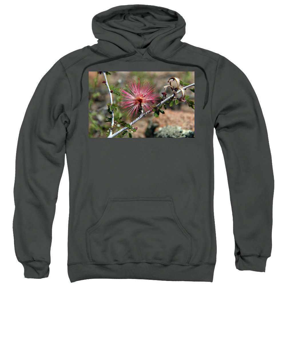 Fairyduster Sweatshirt featuring the photograph Wild Pink Fairy Duster by Elizabeth Rose