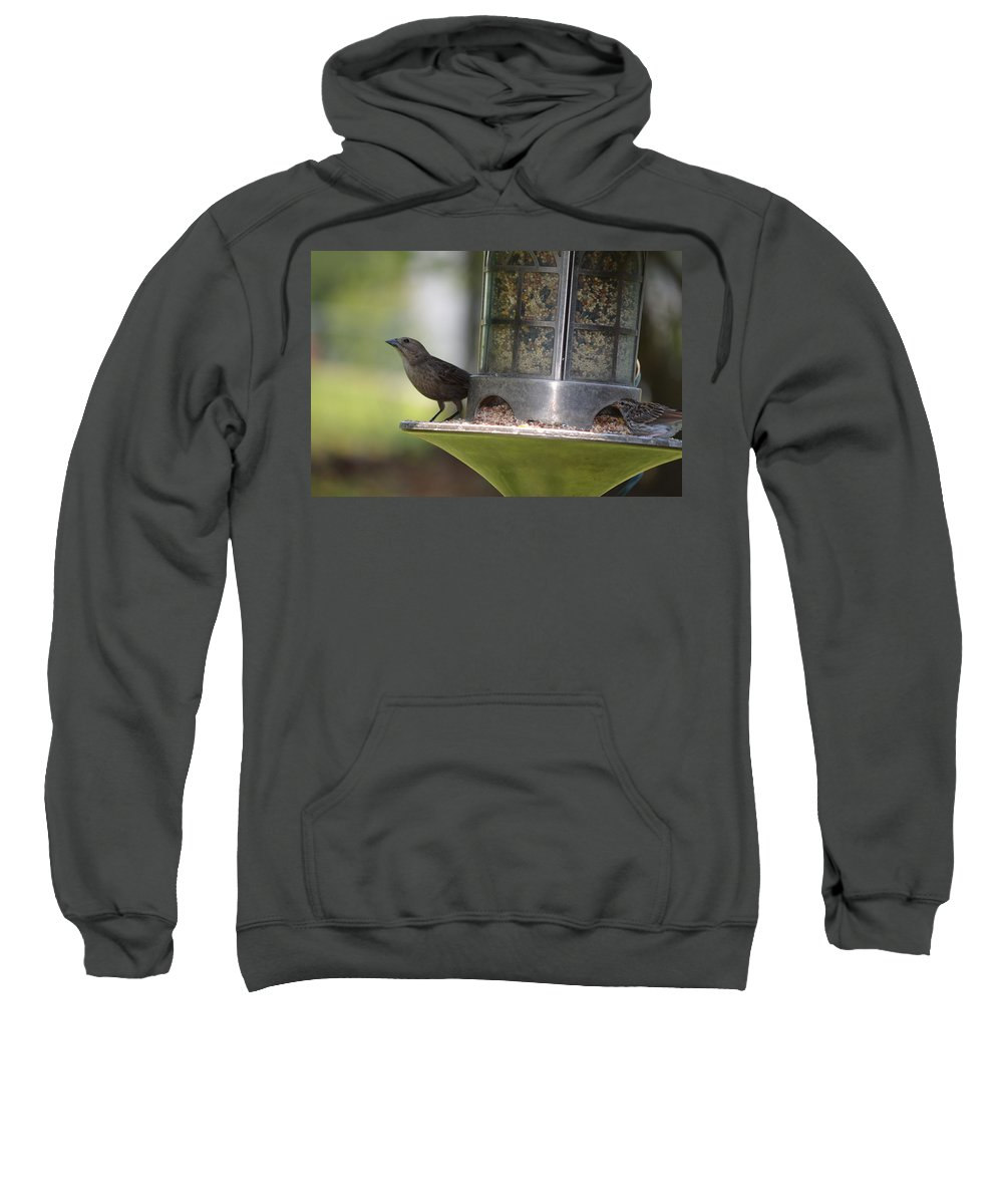 Birds Sweatshirt featuring the photograph With A Song In My Heart by Maria Urso
