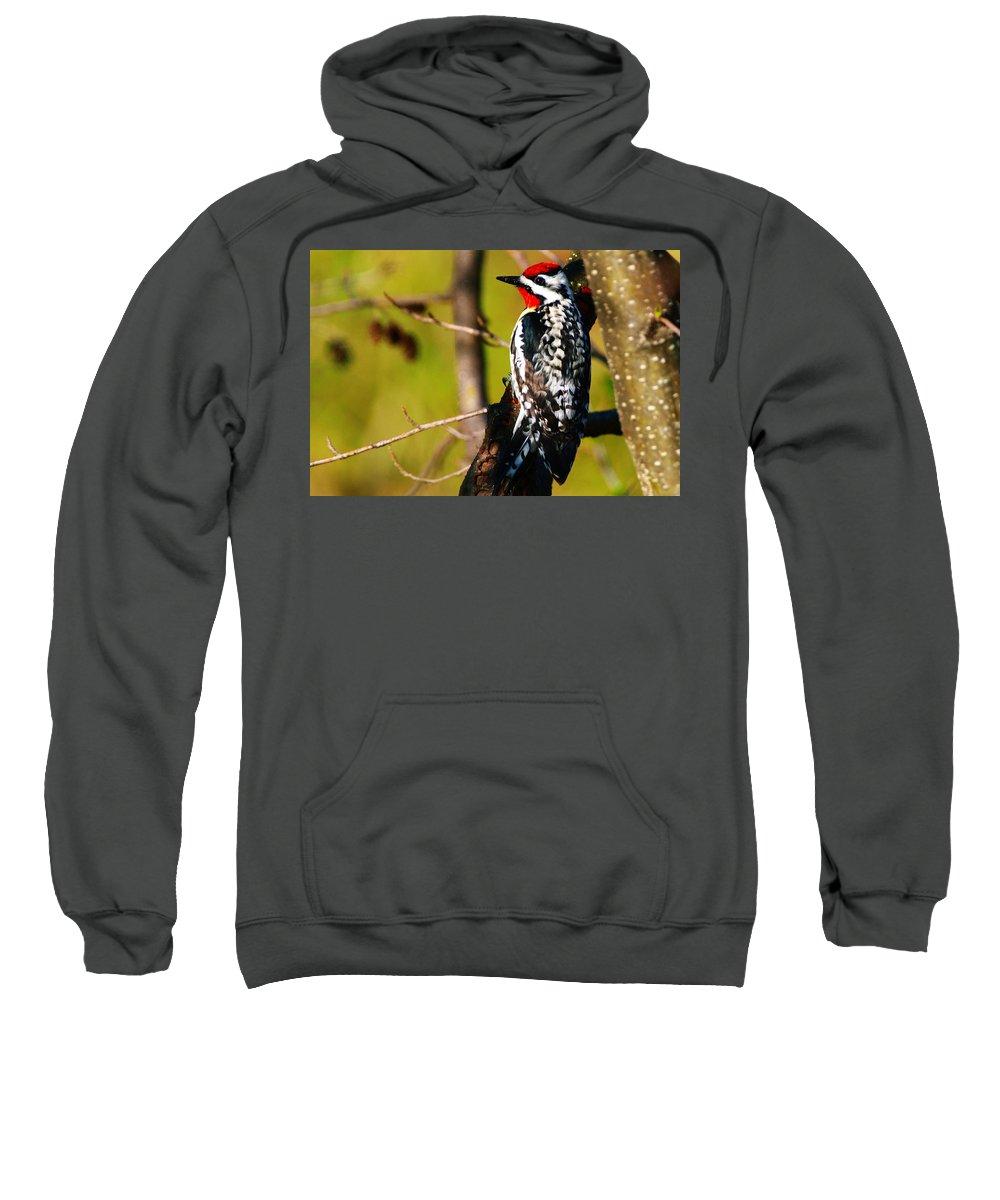 Woodpecker Sweatshirt featuring the photograph Woodpecker by Paul Ge