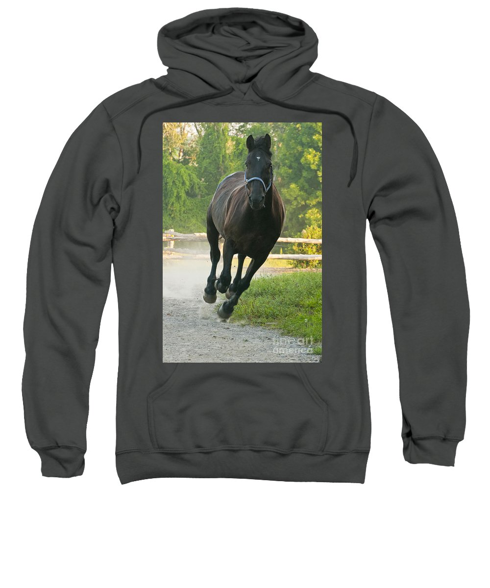Michael Cummings Sweatshirt featuring the photograph Wooo Hoooo by Michael Cummings