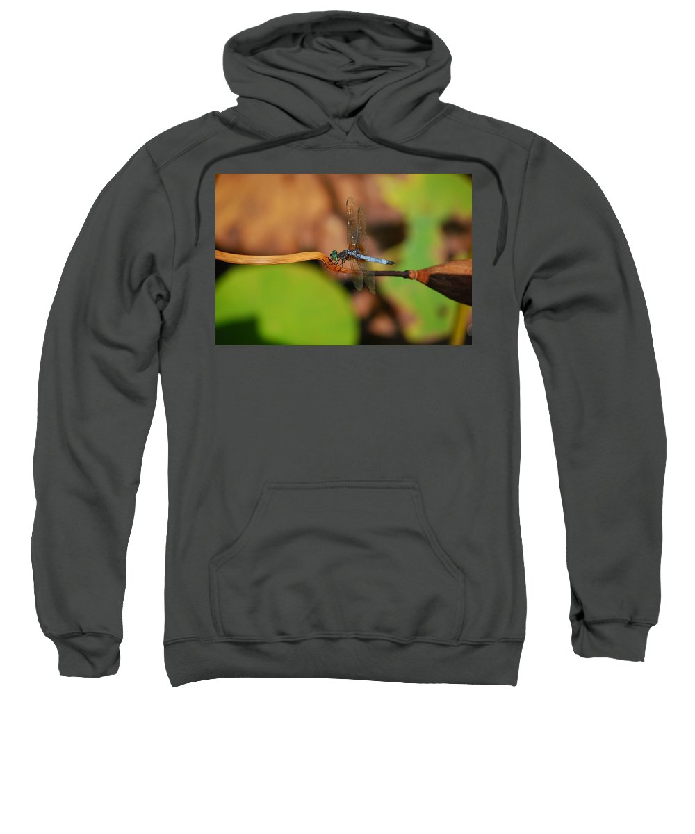 Dragonfly Sweatshirt featuring the photograph Wounded Wing by Lori Tambakis