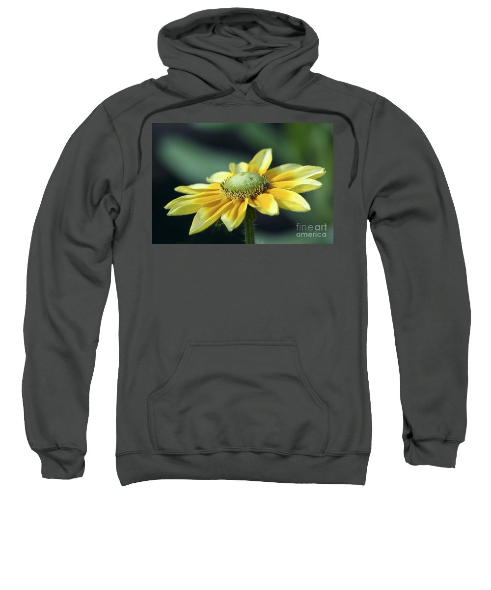 Flower Sweatshirt featuring the photograph Yellow Daisy by Teresa Zieba
