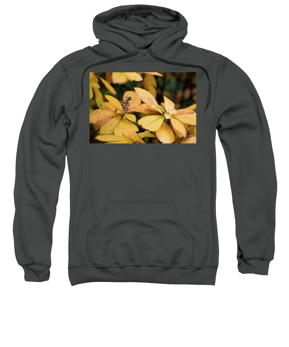 New York City Sweatshirt featuring the photograph Yellow Petal Leaf With Sprig by Lorraine Devon Wilke