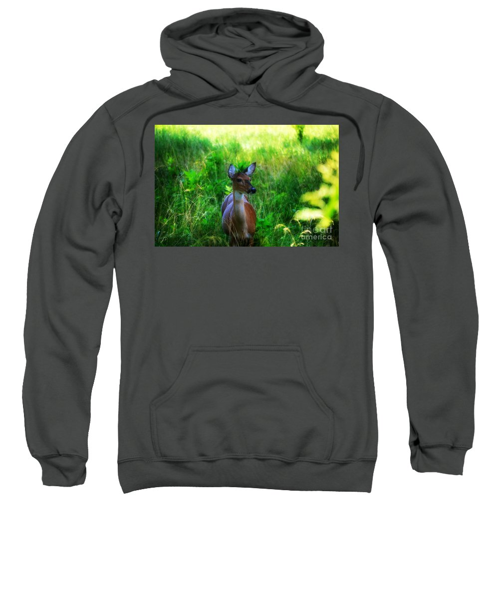 Landscape Sweatshirt featuring the photograph Young Deer by Peggy Franz