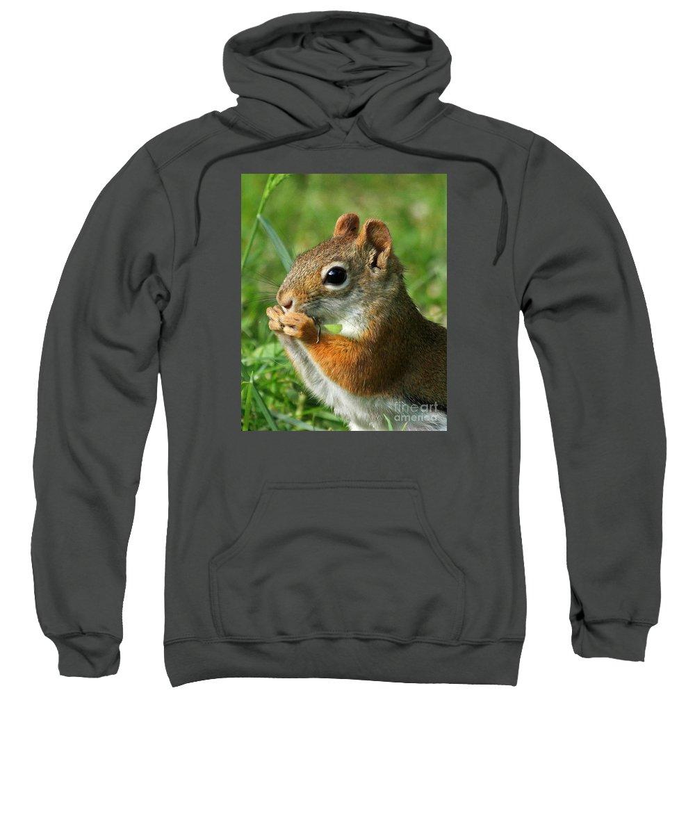 Squirrel Sweatshirt featuring the photograph Yummy by Lloyd Alexander