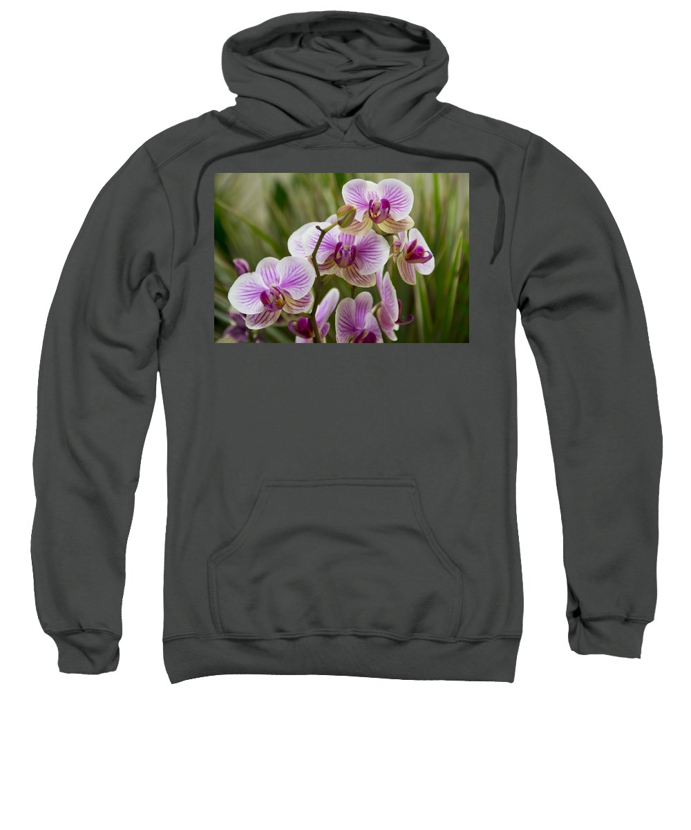 Exotic Sweatshirt featuring the photograph Zen Garden by Angelina Vick