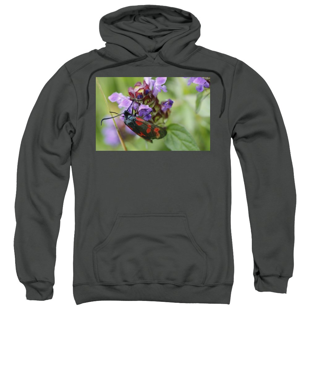 Burnet Moth Sweatshirt featuring the photograph Burnet Moth by Martina Fagan