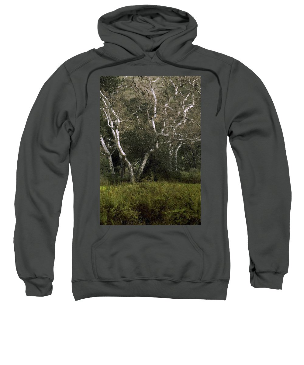 Tree Sweatshirt featuring the photograph Dv Creek Trees by Karen W Meyer