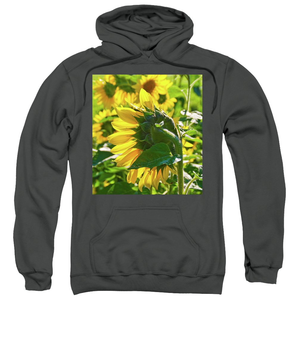 Gardens Sweatshirt featuring the photograph Sunflower 7249a by Guy Whiteley