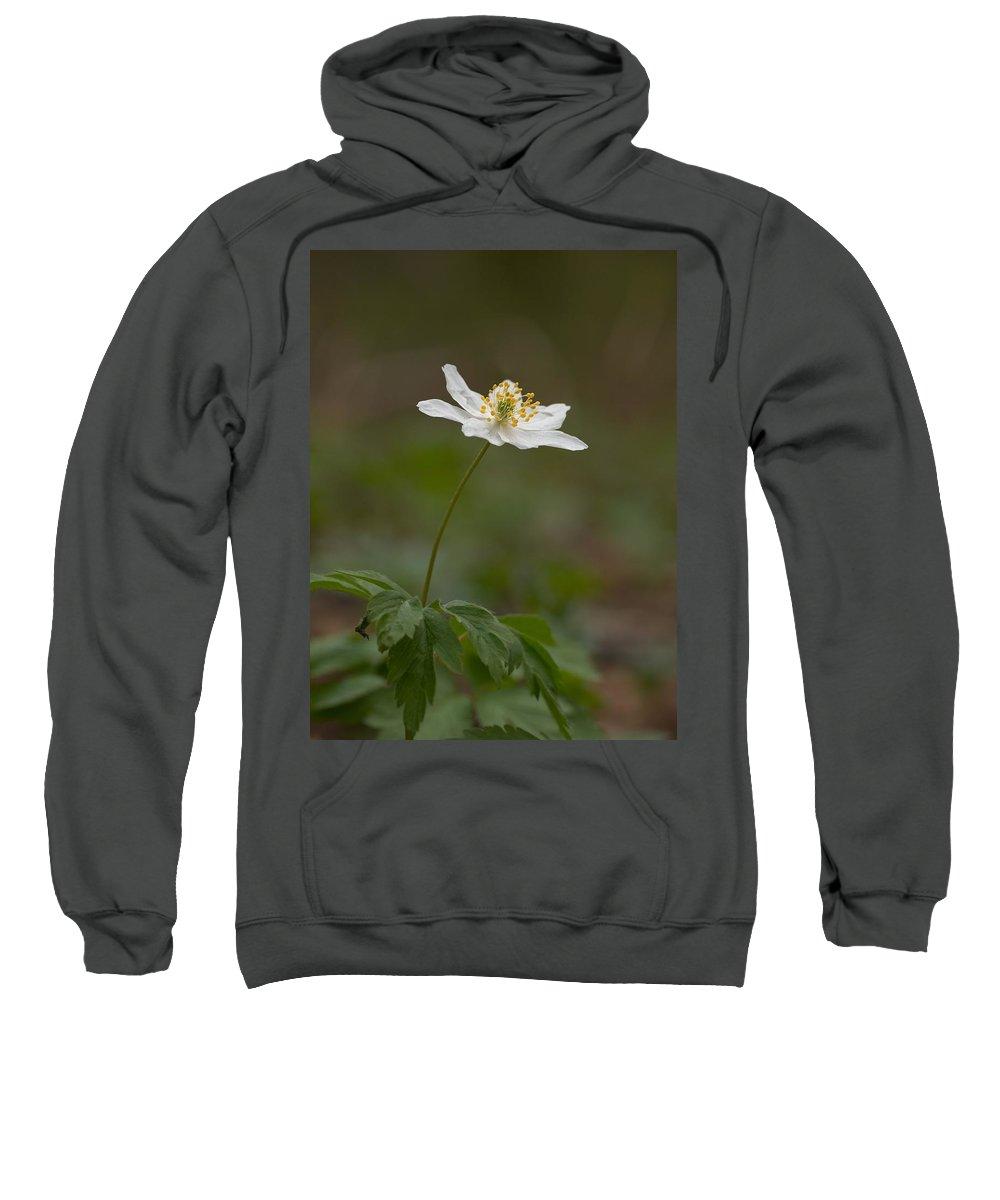 Lehtokukka Sweatshirt featuring the photograph Wood Anemone by Jouko Lehto