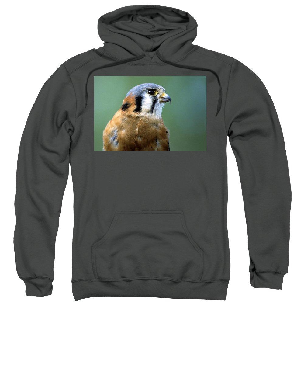 Wildlife Sweatshirt featuring the photograph American Kestrel Male by Larry Allan