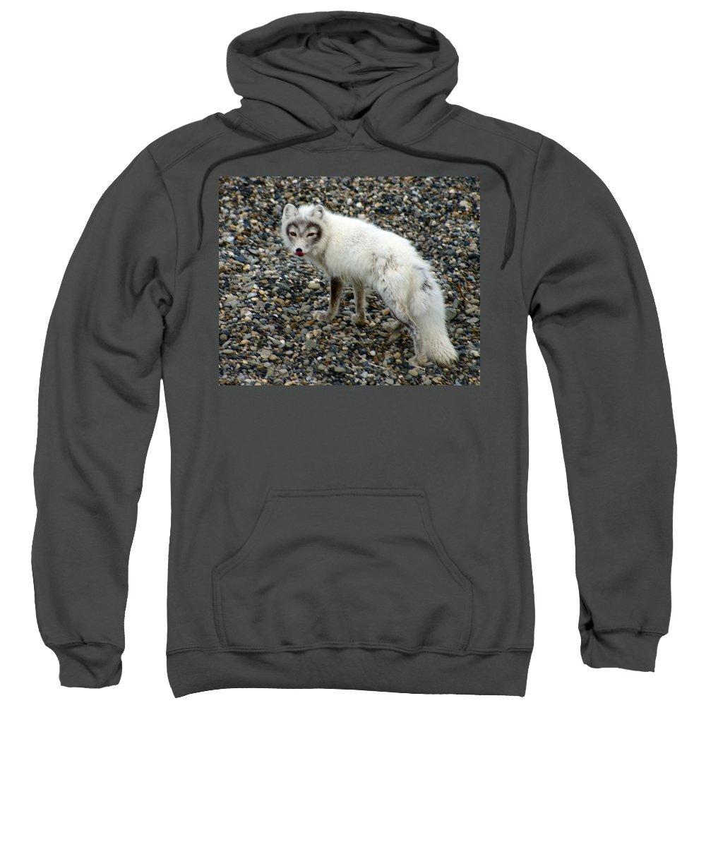 Arctic Fox Sweatshirt featuring the photograph Arctic Fox by Anthony Jones