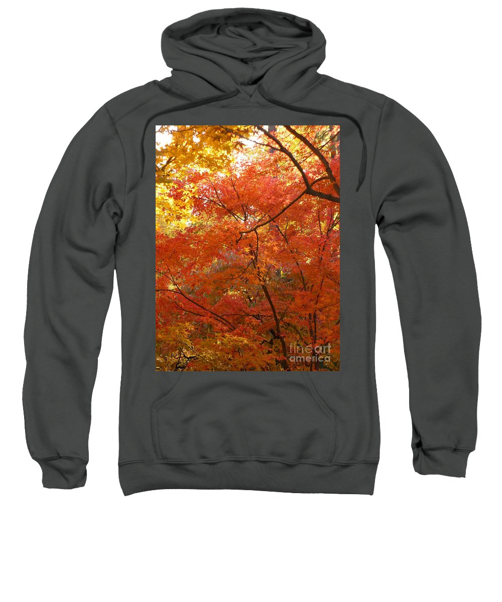 Autumn Sweatshirt featuring the photograph Autumn Gold by Carol Groenen