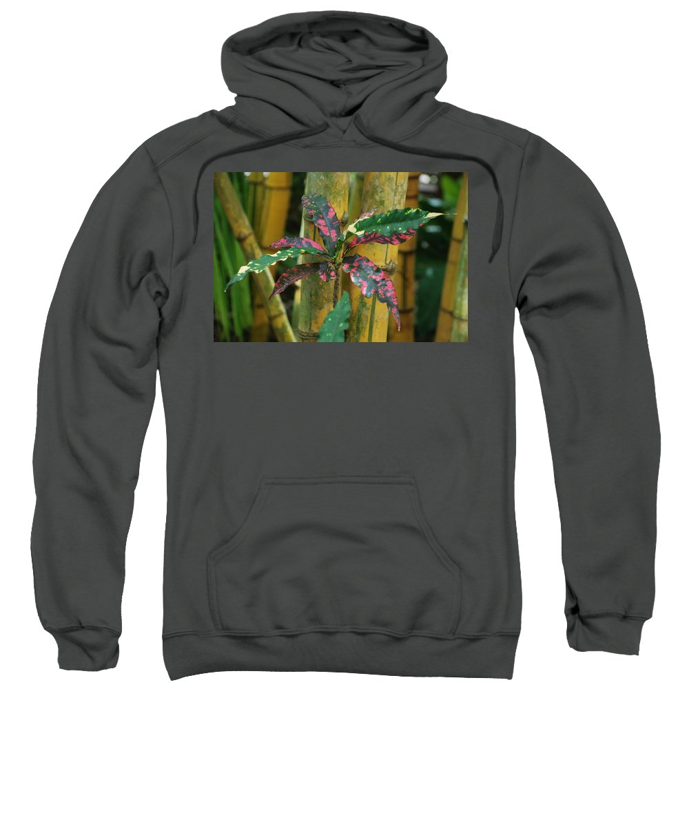Macro Sweatshirt featuring the photograph Bamboo Flower by Rob Hans