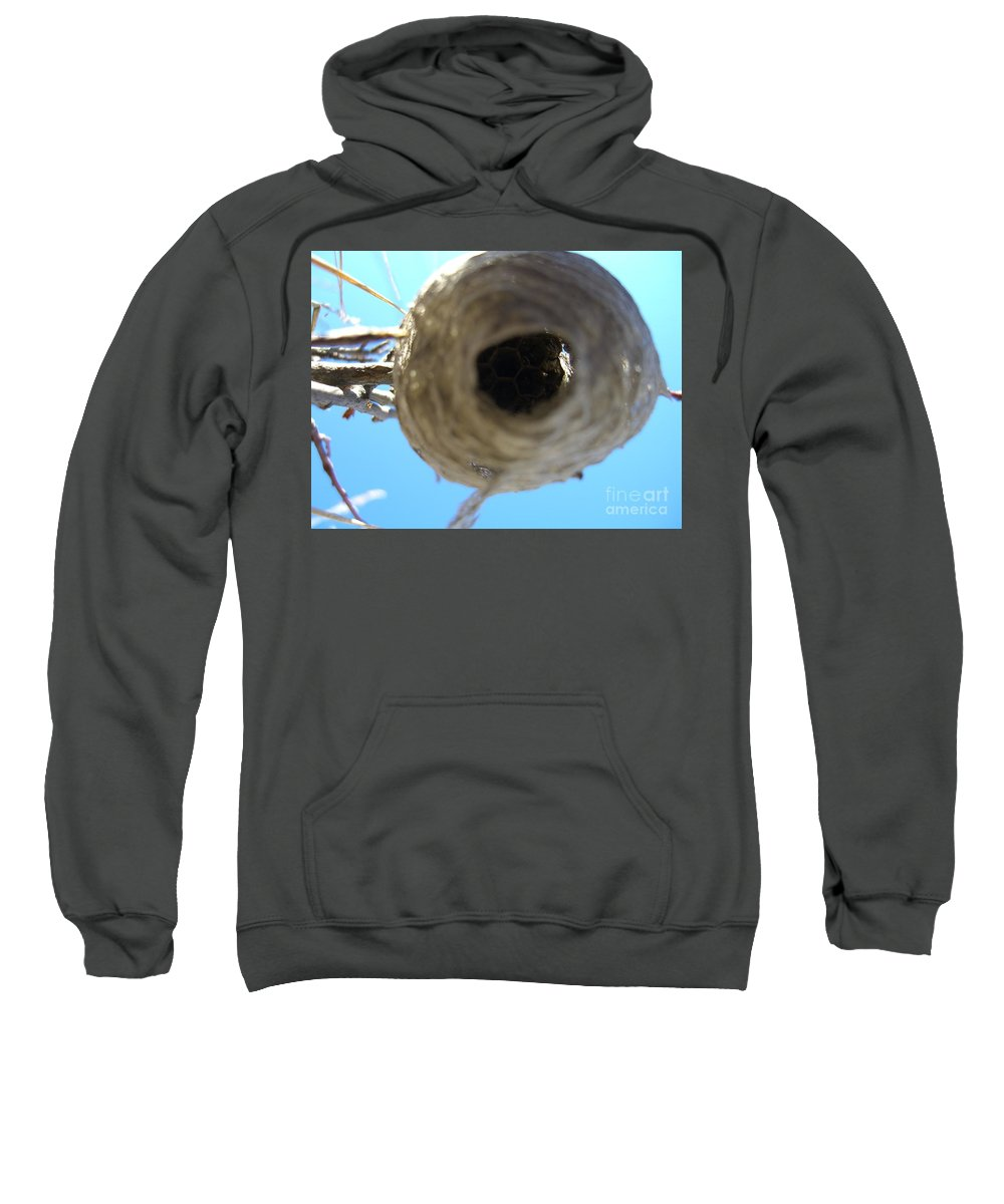 Photograph Bee Hive Blue Sky Branch Insect Sweatshirt featuring the photograph Bee Hive by Seon-Jeong Kim