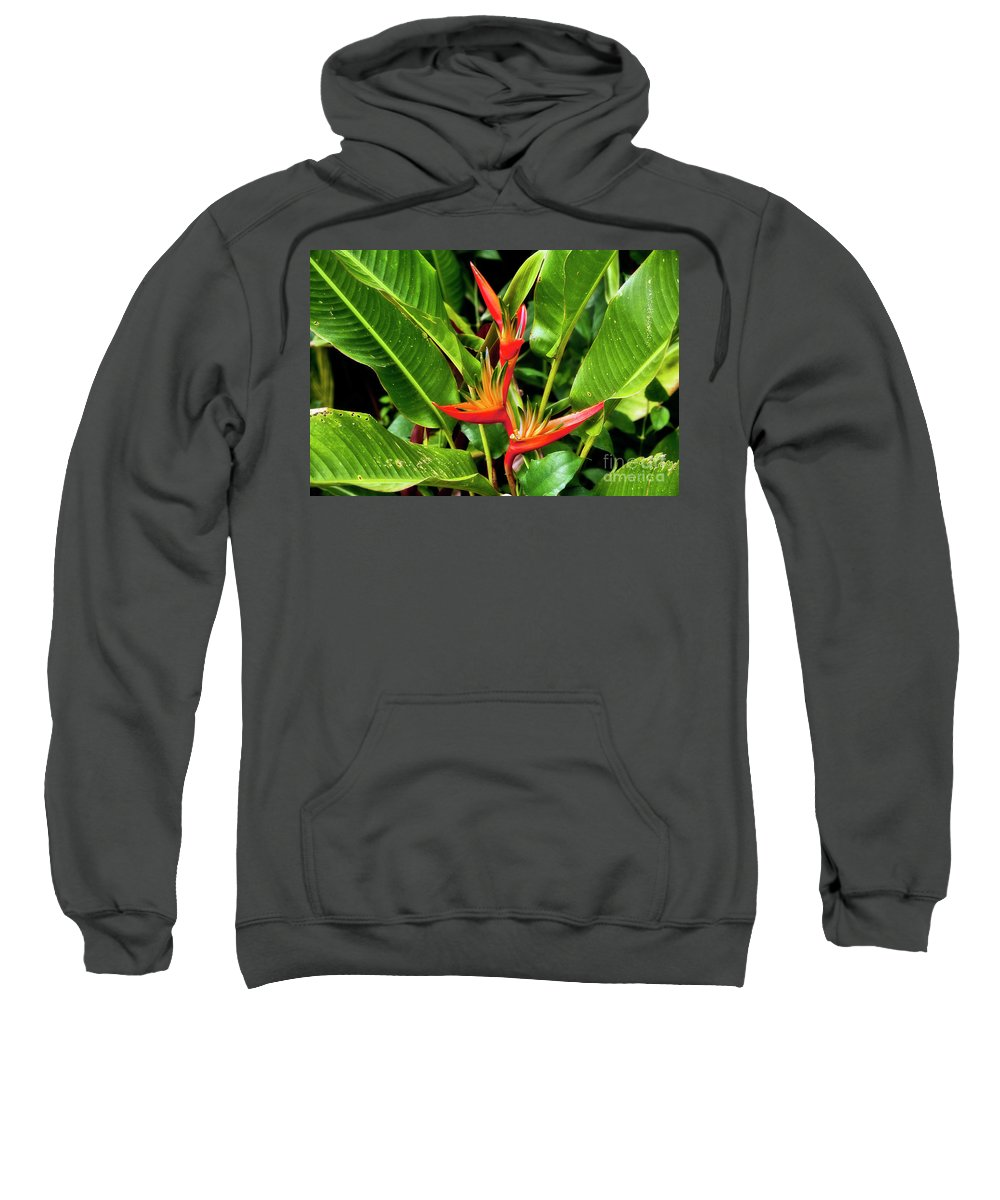 Flower Sweatshirt featuring the photograph Bird Of Paradise by Madeline Ellis
