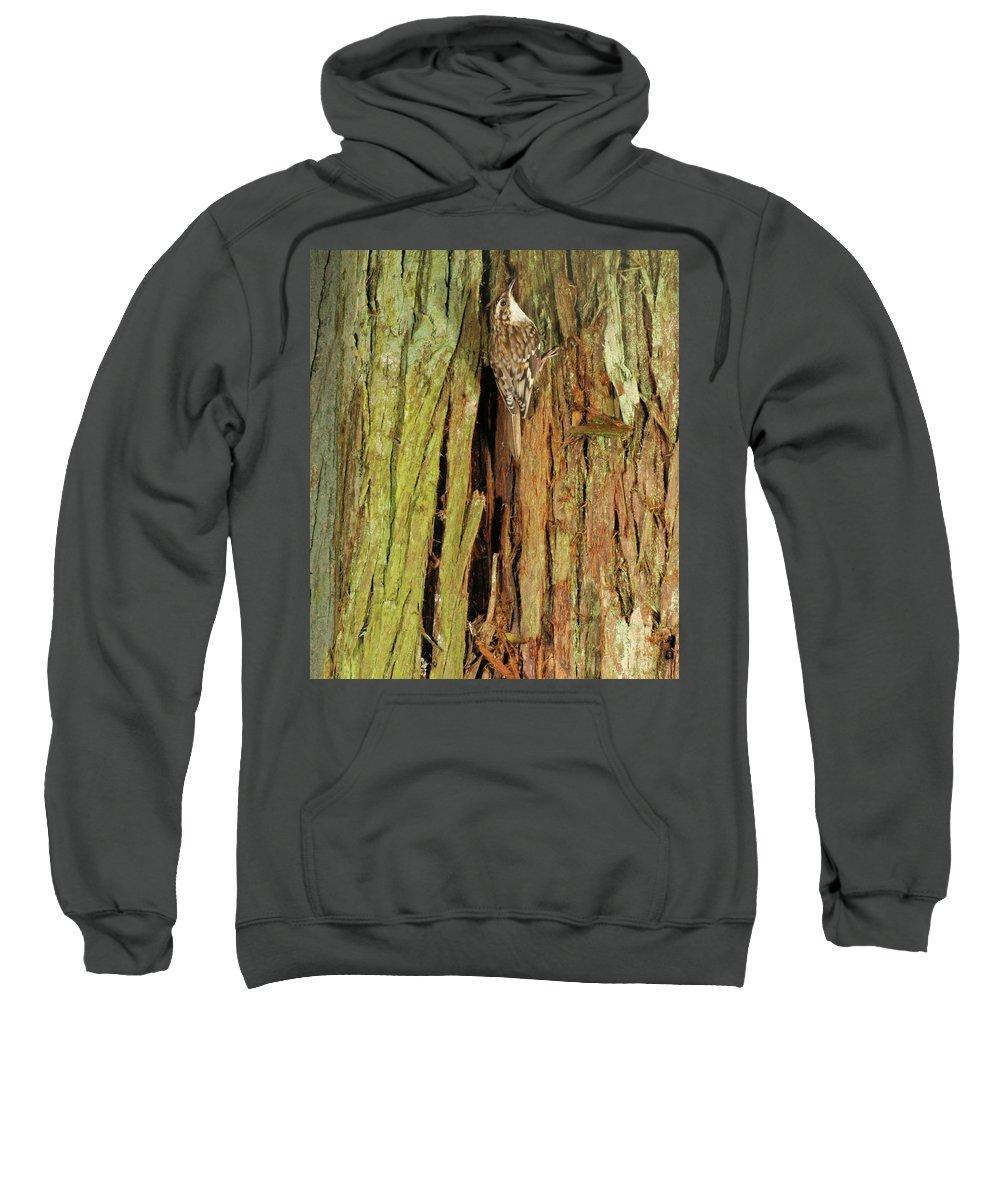Portrait Sweatshirt featuring the photograph Blending In by Damon Calderwood