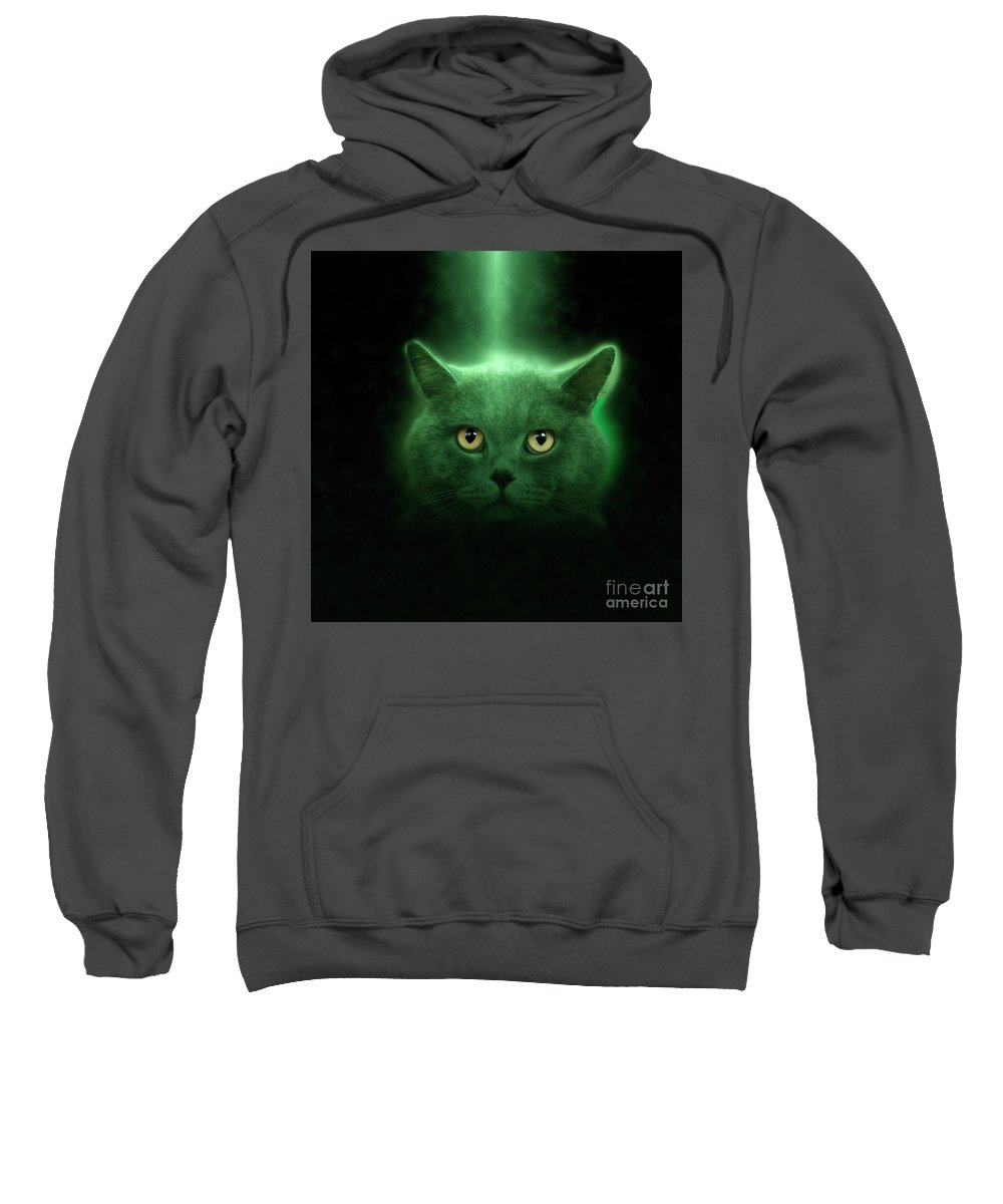 British Shorthair Sweatshirt featuring the photograph British Shorthair Cat by Humourous Quotes