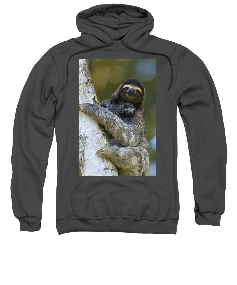 Mp Sweatshirt featuring the photograph Brown-throated Three-toed Sloth by Suzi Eszterhas