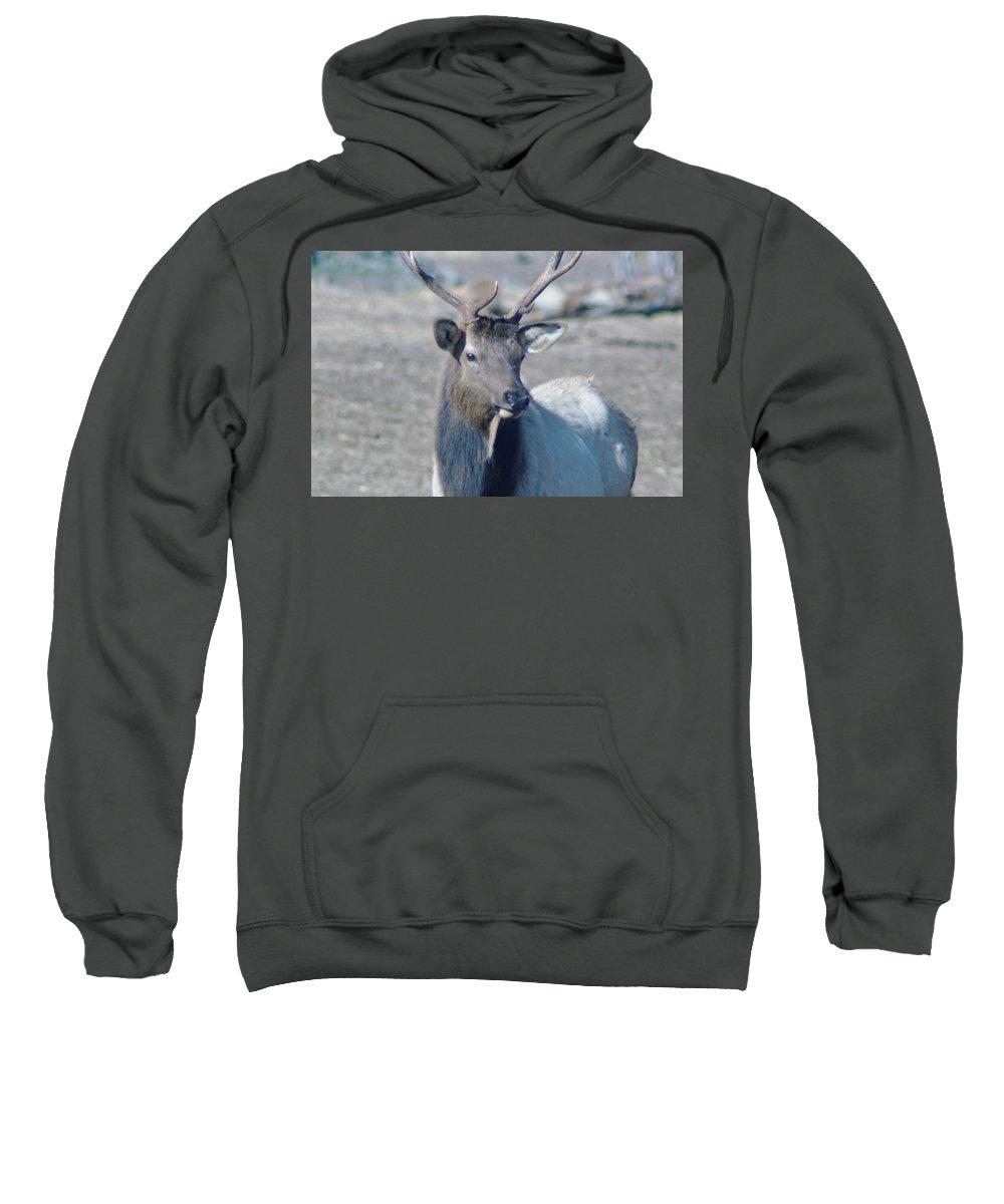 Elk Sweatshirt featuring the photograph Bull Elk by Jeff Swan
