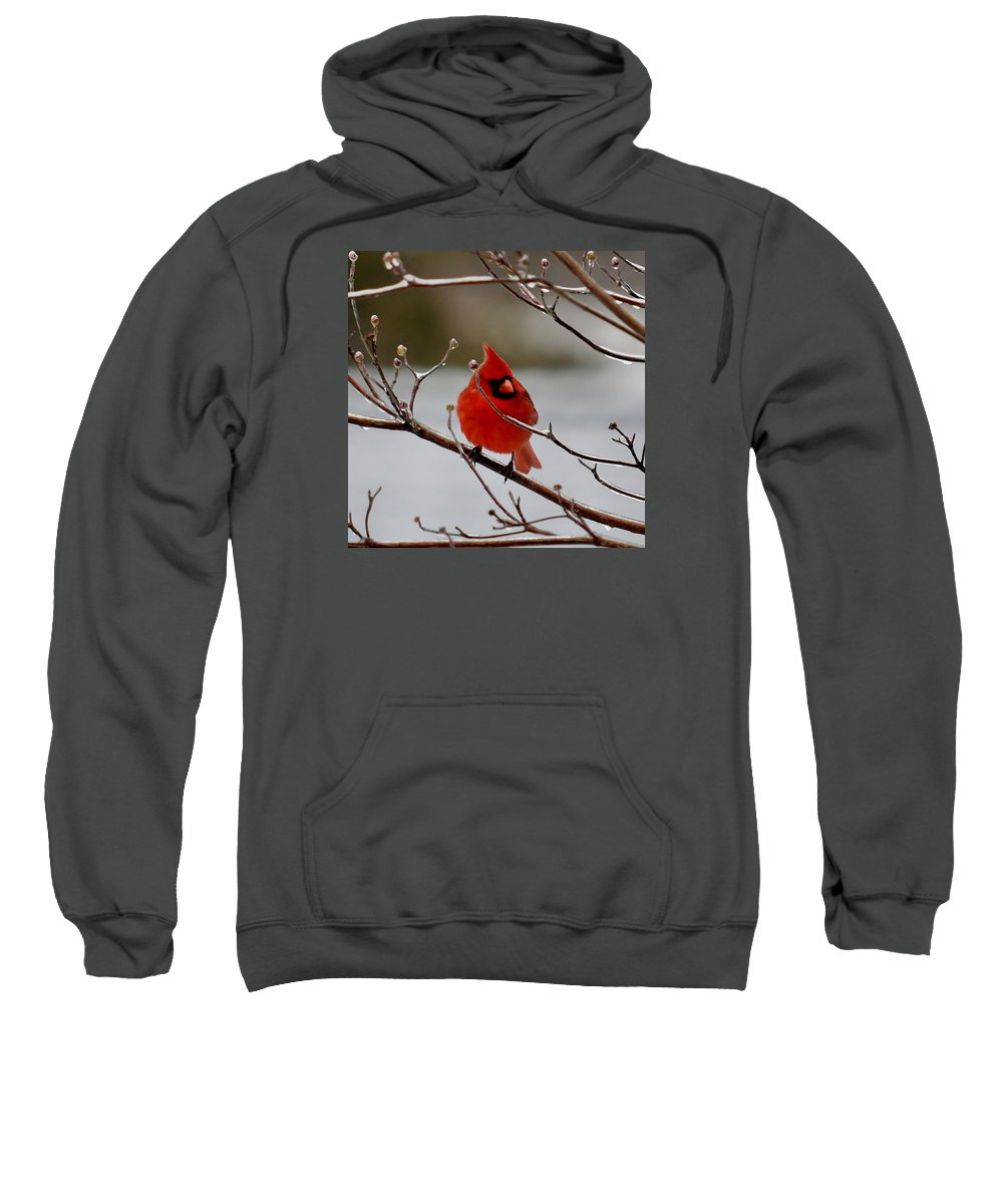 Cardinal Snow Storm Winter Time Sweatshirt featuring the photograph Cardinal by Jimmy Marlow