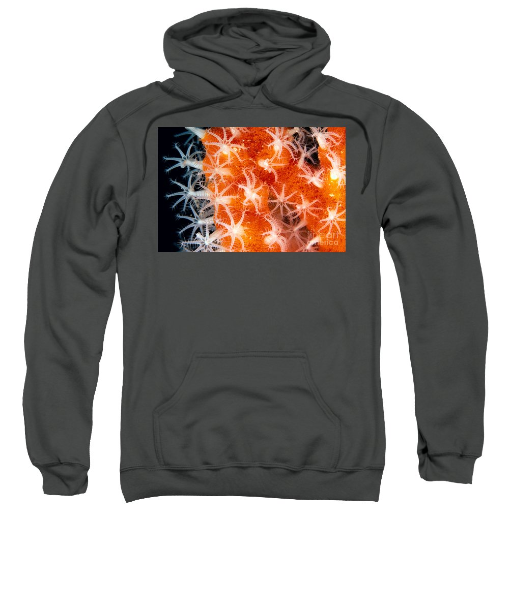 C1916 Sweatshirt featuring the photograph Coral, Close-up by Dave Fleetham - Printscapes
