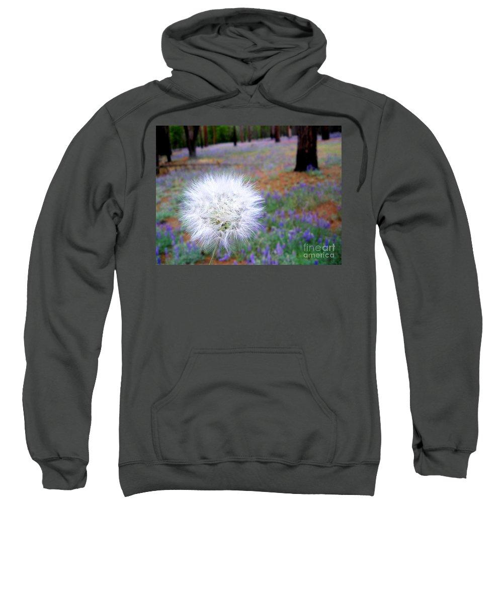 Beauty Sweatshirt featuring the photograph Dandelion by Henrik Lehnerer