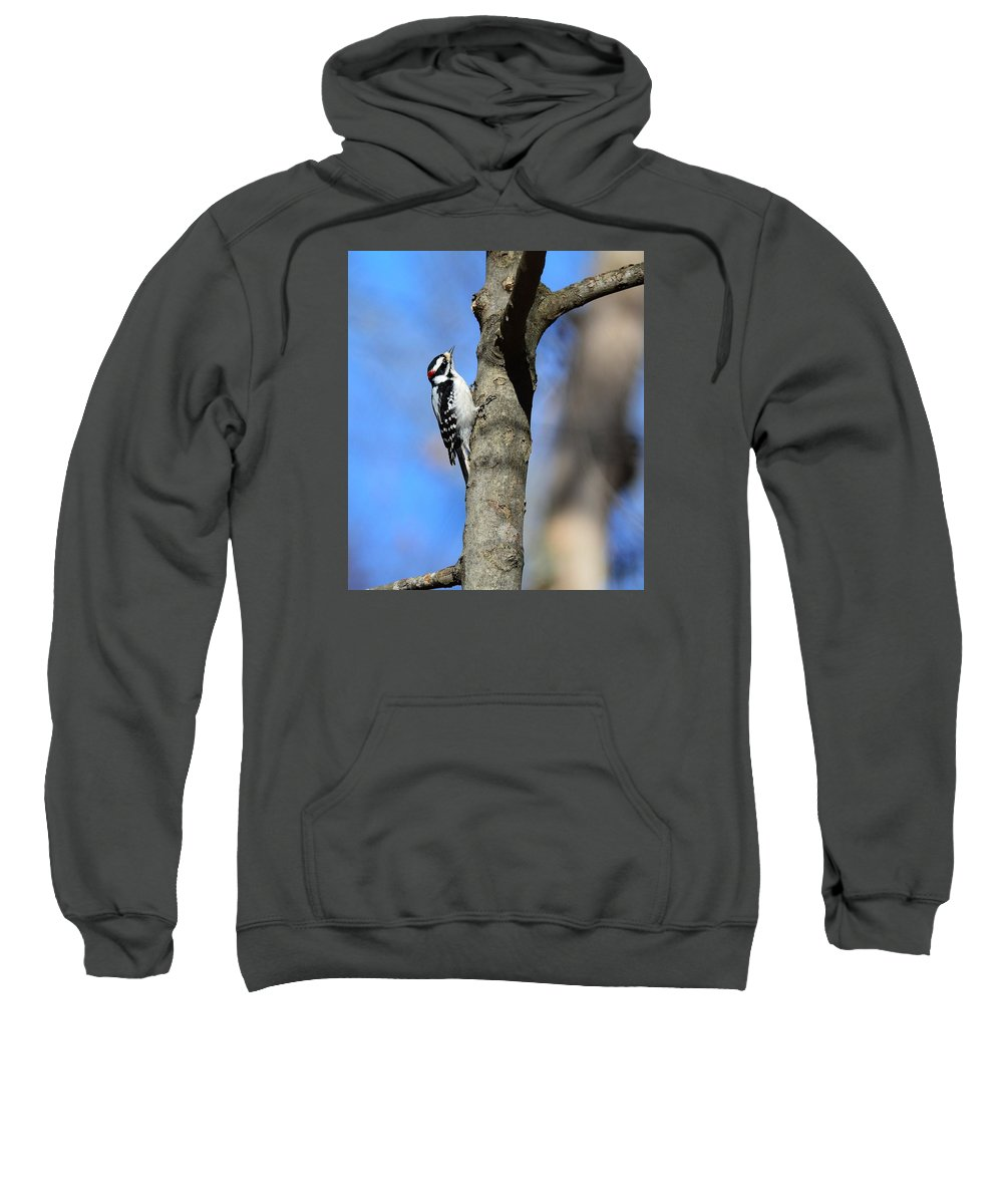 Downy Sweatshirt featuring the photograph Downy Woodpecker by Jo-Ann Matthews