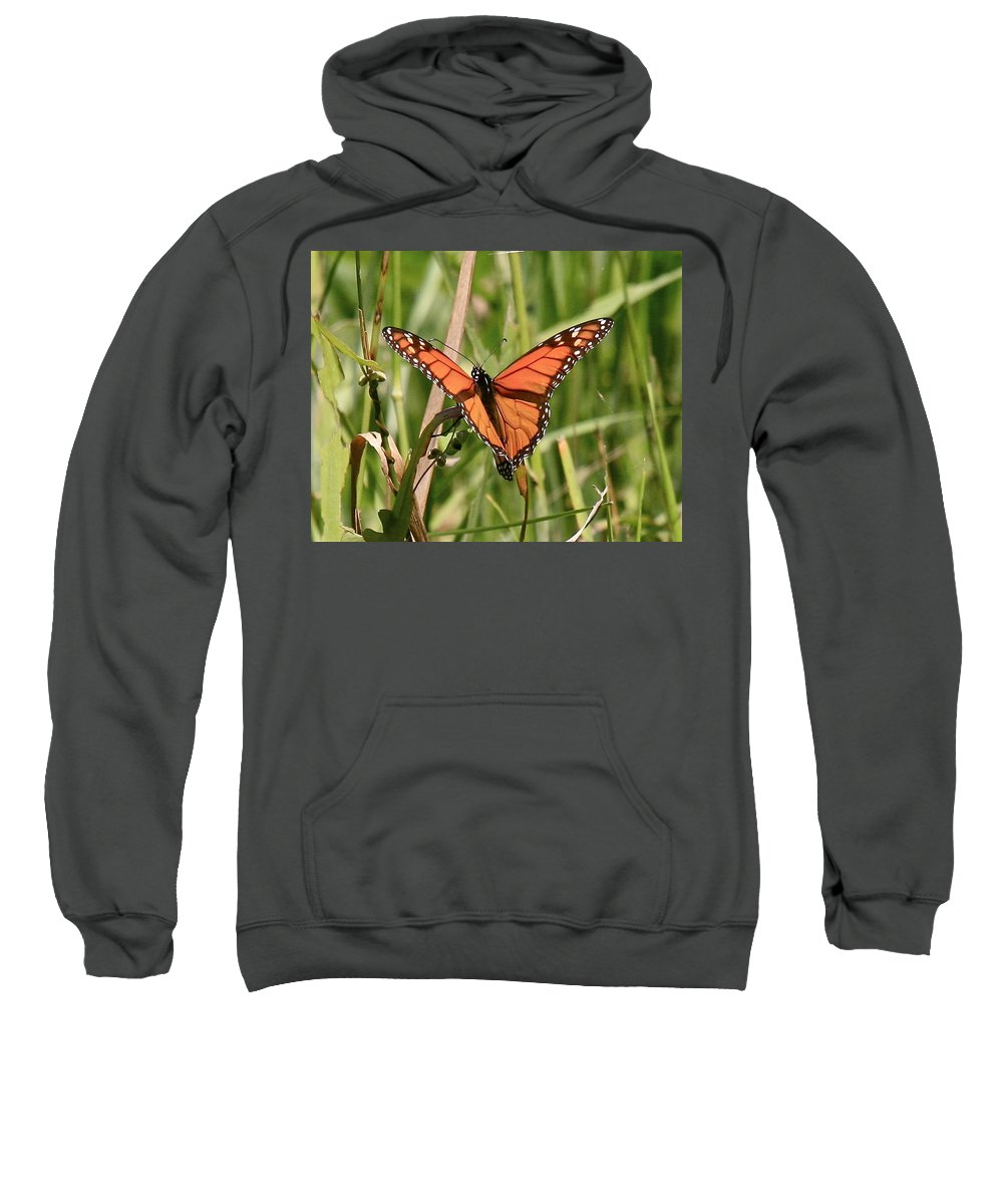 Butterfly Sweatshirt featuring the photograph Drying My Wings by Robert Pearson