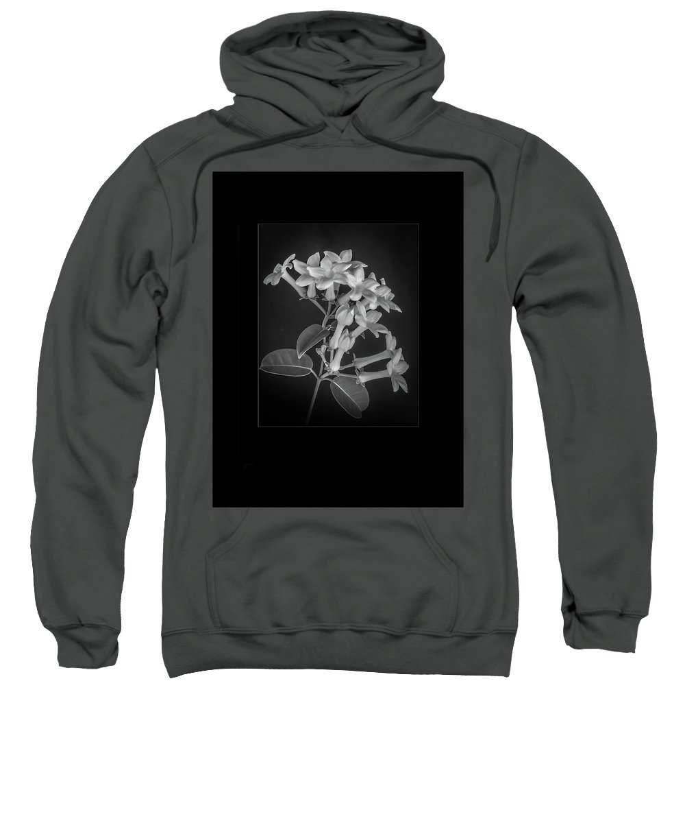 Estephanotis Sweatshirt featuring the photograph Fine Art Framed Study Of Estephanotis- by Peter Hayward Photographer