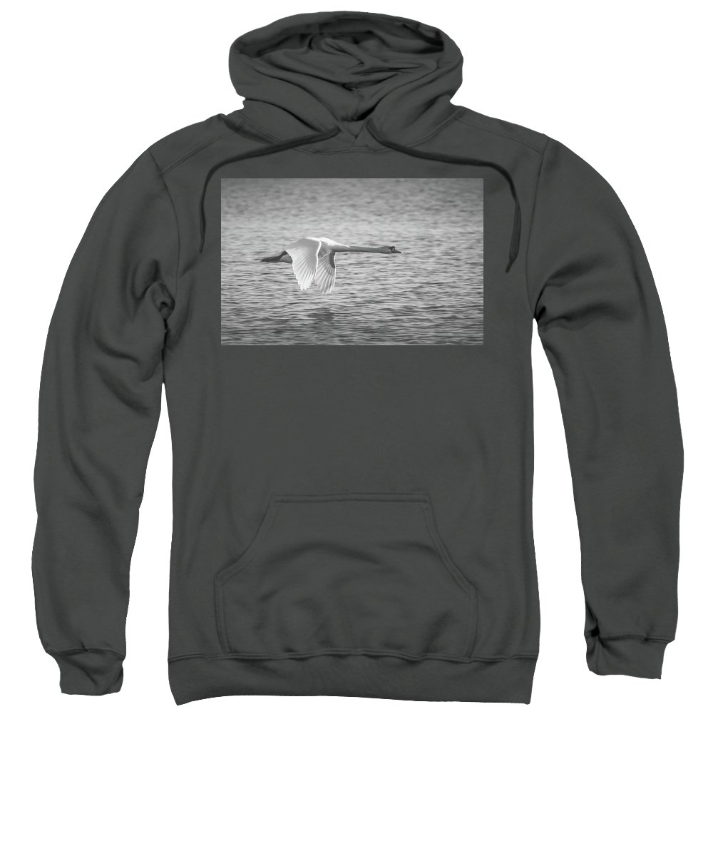 Swan Sweatshirt featuring the photograph Flight Of The Swan by Pixabay