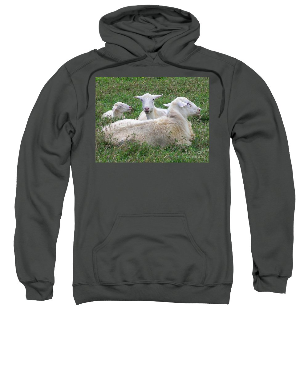 White Animals Sweatshirt featuring the photograph Goat Family by Mary Deal