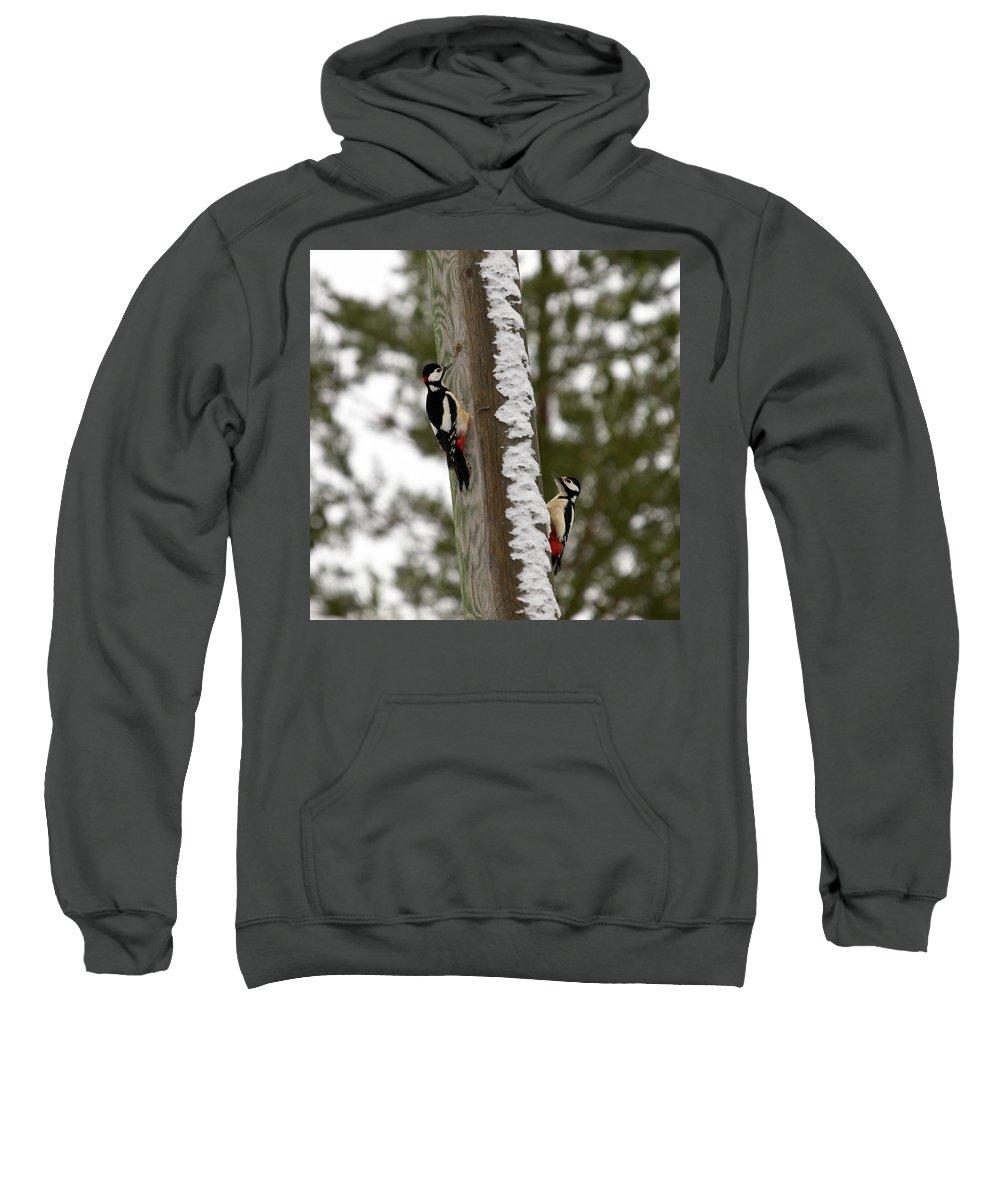 Lehtokukka Sweatshirt featuring the photograph Great Spotted Woodpeckers by Jouko Lehto