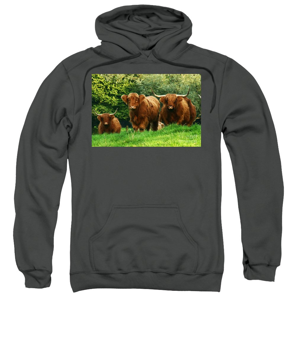 Cow Sweatshirt featuring the photograph Highland Cattle by Angel Ciesniarska
