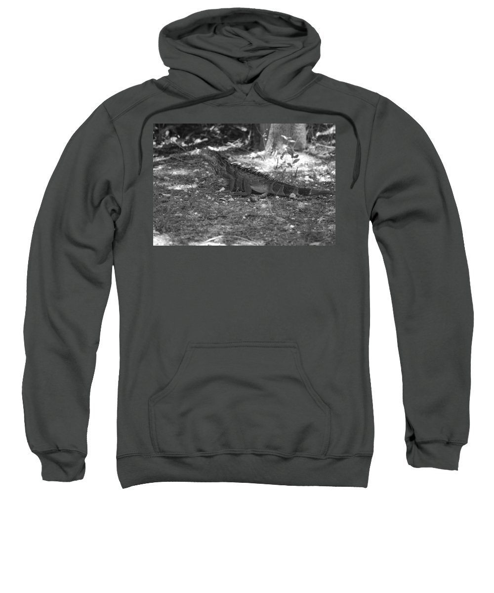 Black And White Sweatshirt featuring the photograph I Iguana by Rob Hans