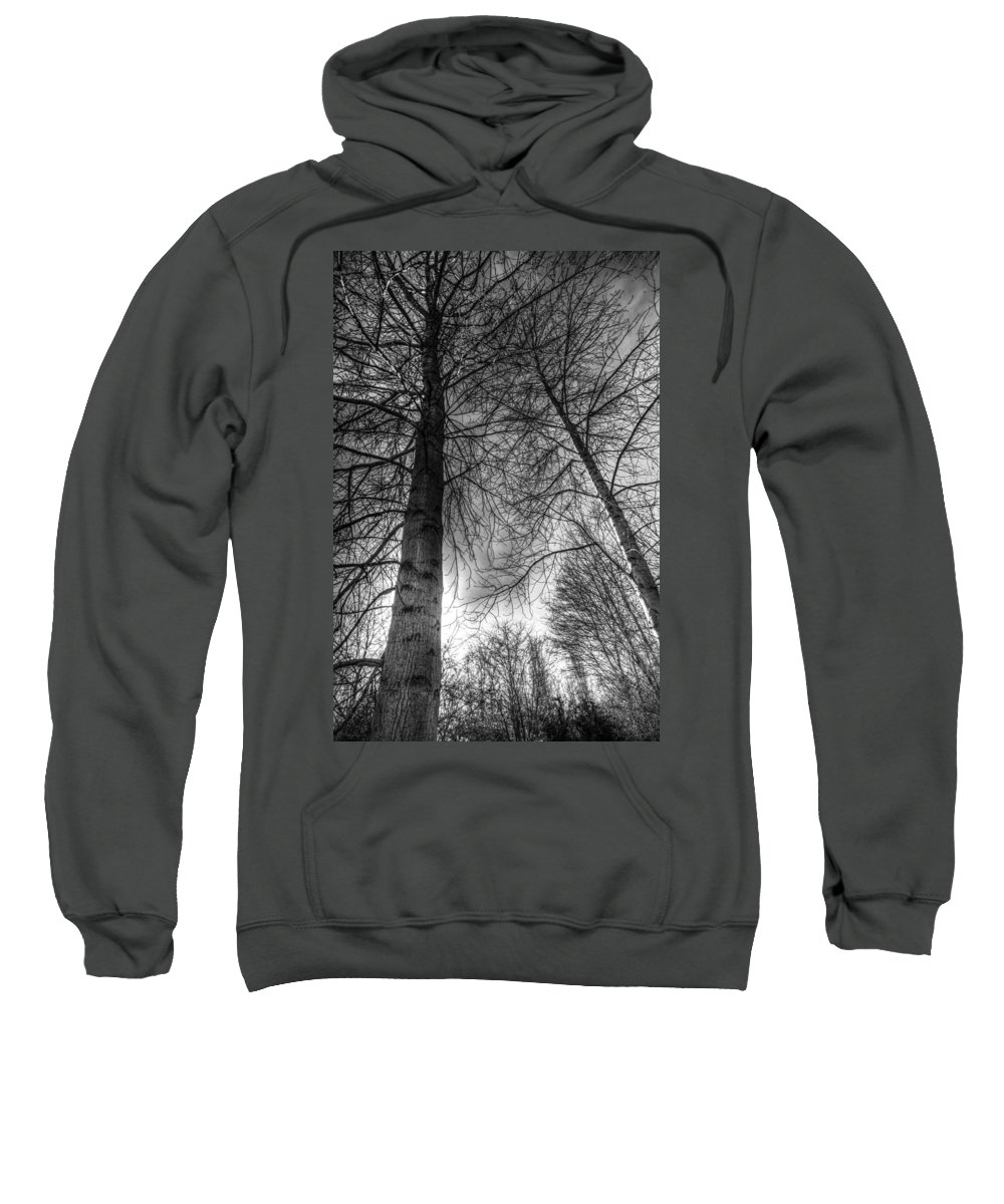 Trees Sweatshirt featuring the photograph Majestic Trees by David Pyatt