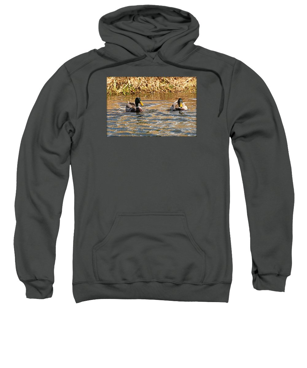 Black And White Photography Sweatshirt featuring the photograph Mallards On Pond by John Ohm