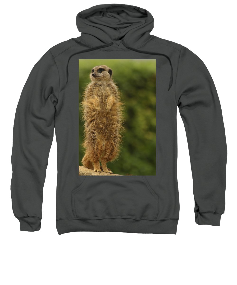 Meercat Sweatshirt featuring the photograph Meercat by Ian Middleton