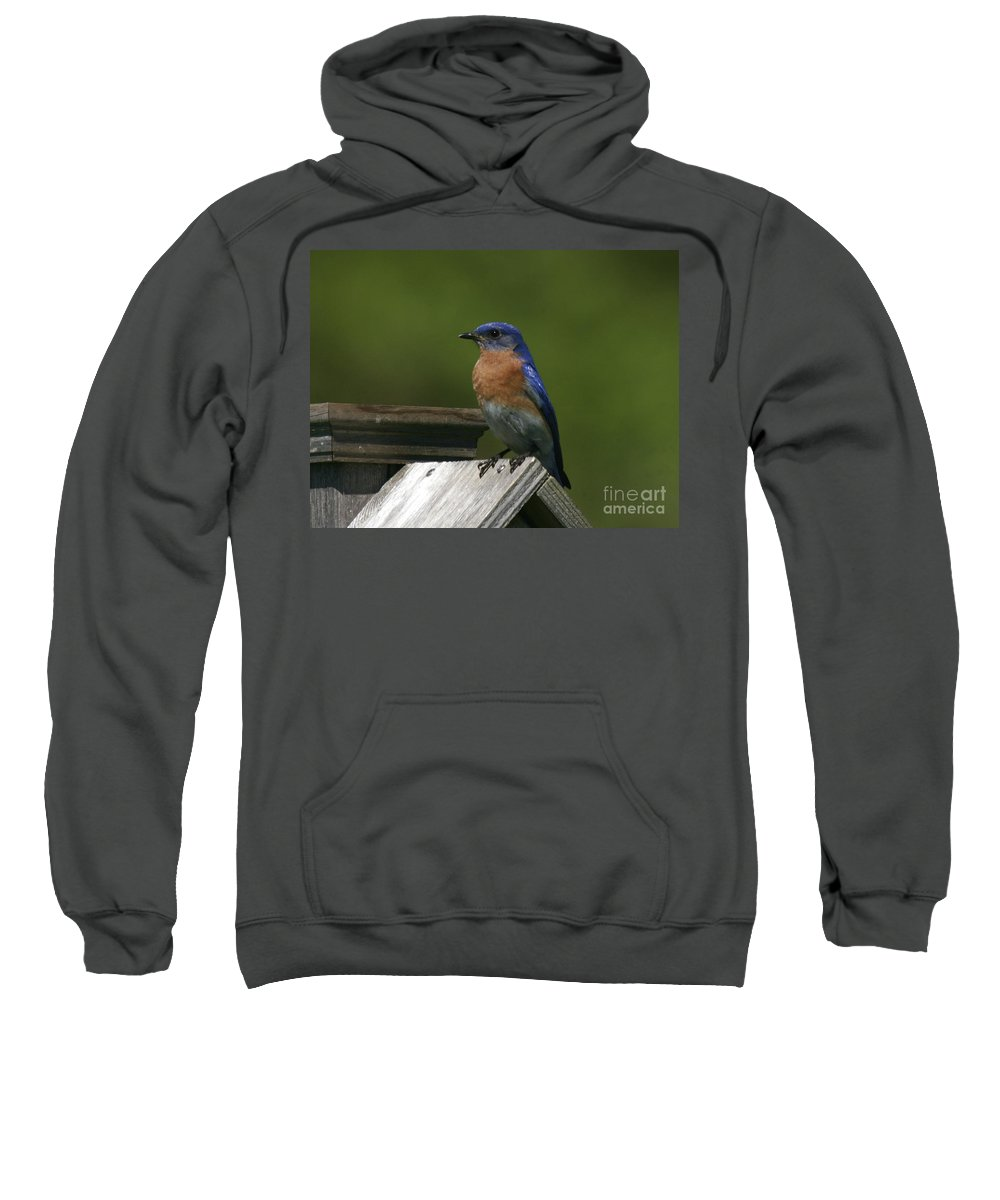 Blue Bird Sweatshirt featuring the photograph Mr Blue Bird by Robert Pearson