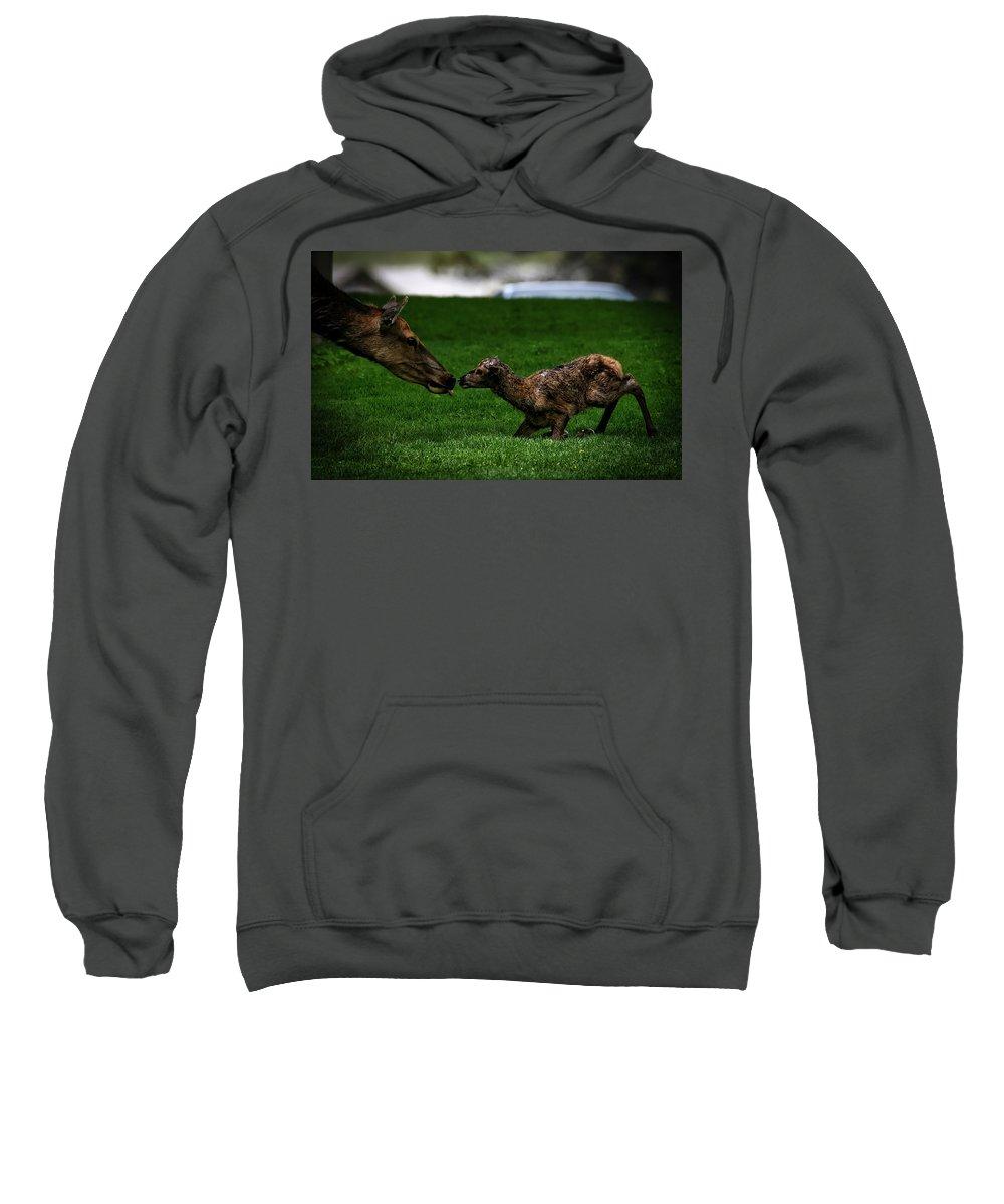 Newborn Sweatshirt featuring the photograph Newborn Elk by Pixabay