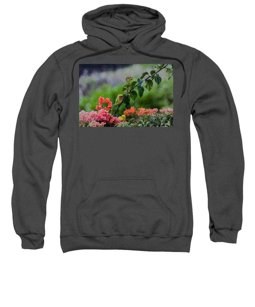 Birds Sweatshirt featuring the photograph Parakeet South Maui by Robert Morris