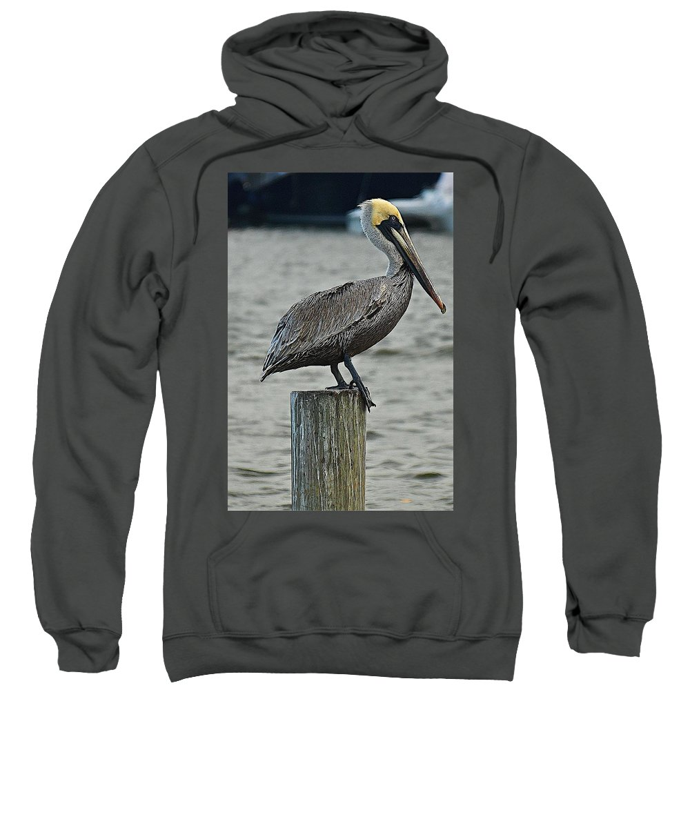Bird Sweatshirt featuring the photograph Pelican by Colleen Fox