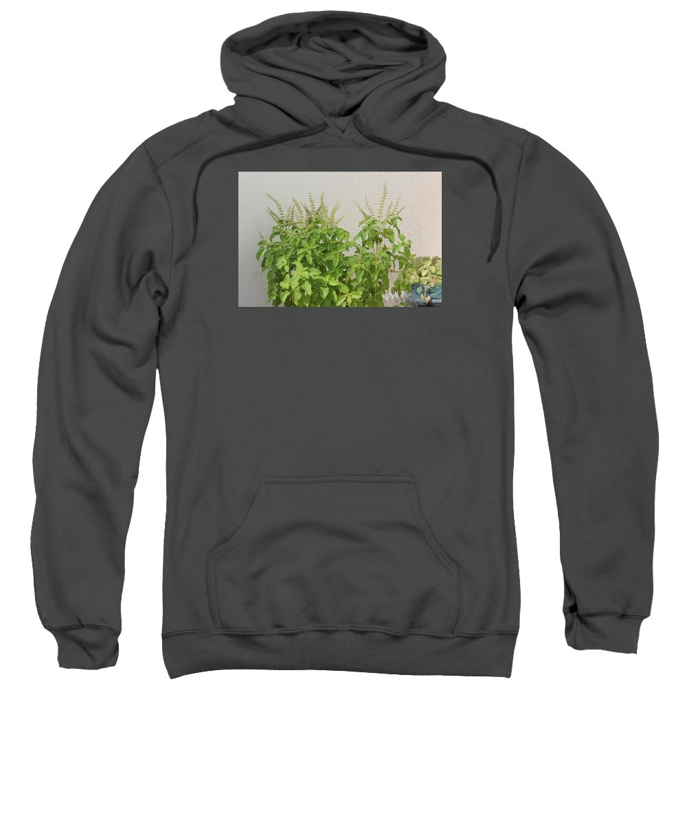 Tulsi Plant Sweatshirt featuring the photograph Photo by Manoj John