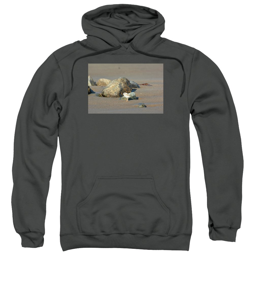 Plover Chick Sweatshirt featuring the photograph Plover Chick by Jo-Ann Matthews