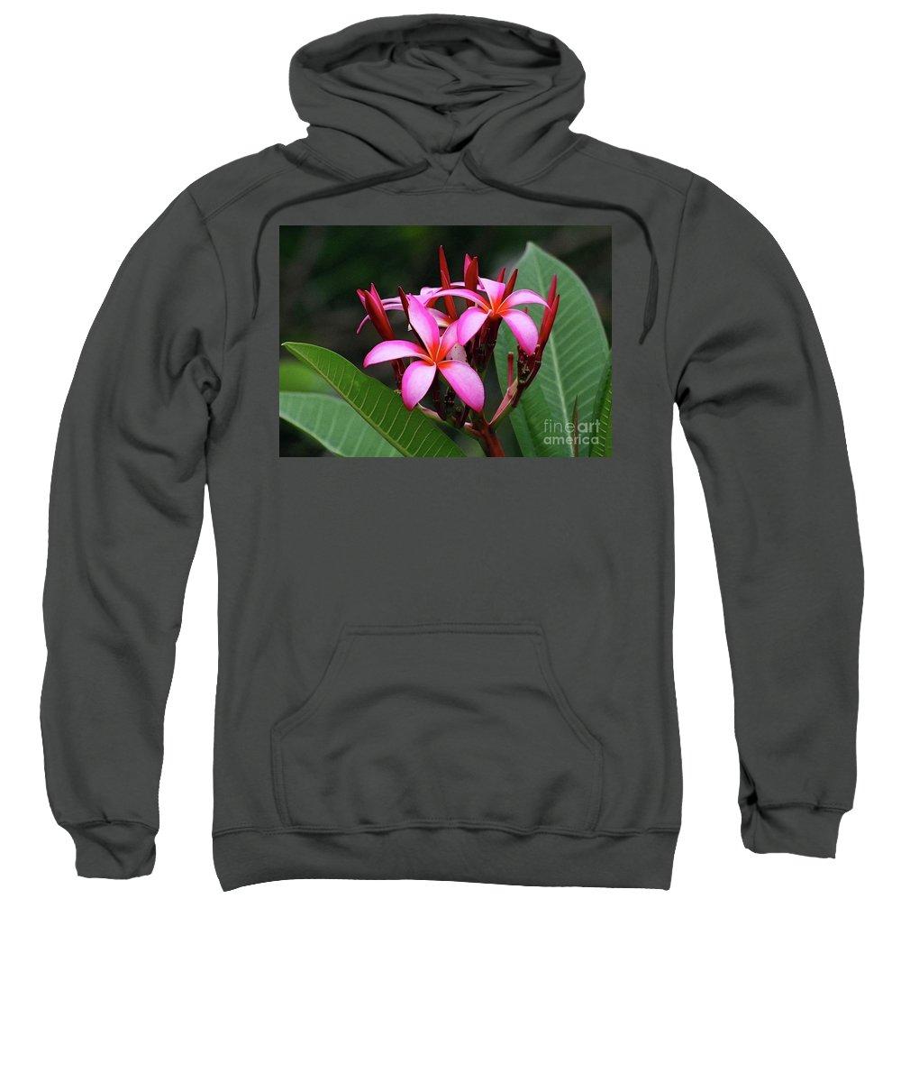 Plumeria Flower Sweatshirt featuring the photograph Plumeria Flowers 4 by Gregory E Dean