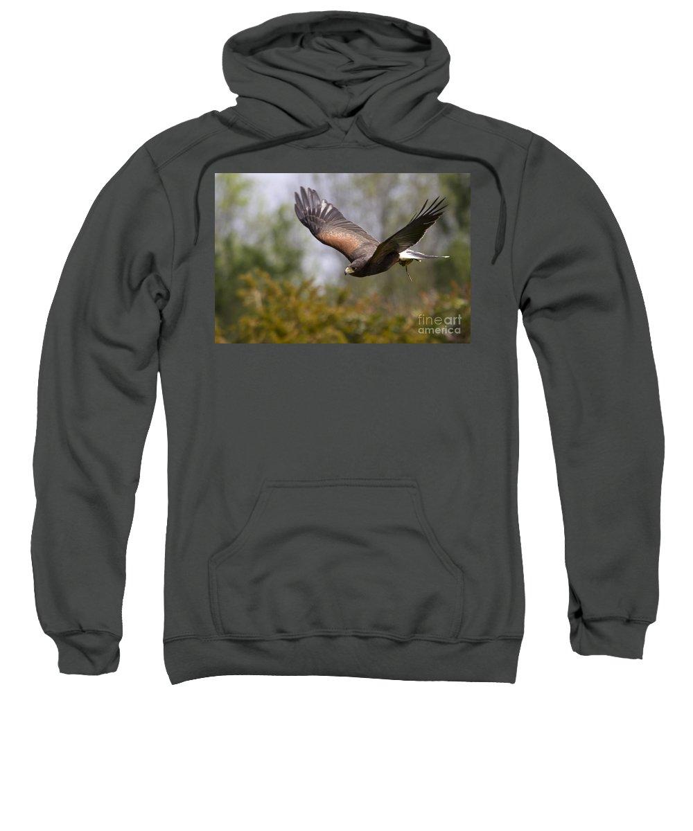 Bird Of Prey Sweatshirt featuring the photograph Prepare For Landing by Angel Ciesniarska